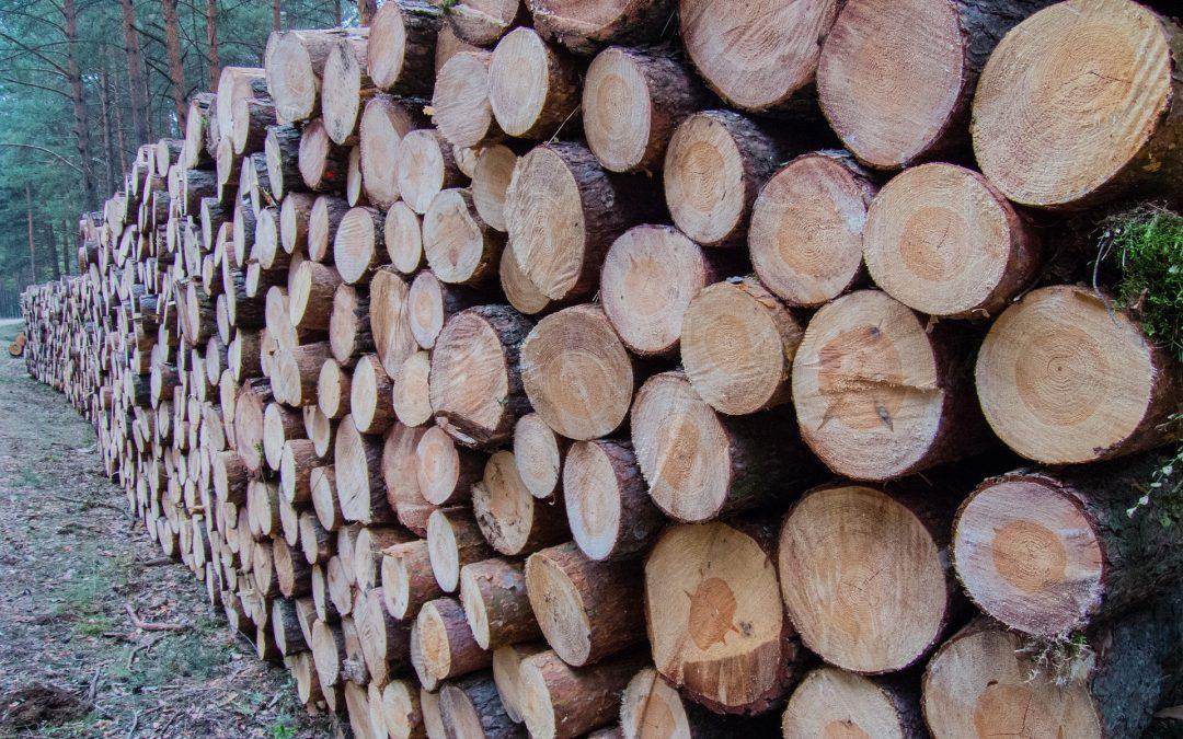 """""""NIE"""" dla eksportu drewna okrągłego poza Unię Europejską"""